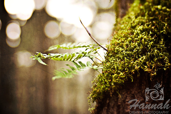 Close-up of a Tree Moss with growing plant in the middle Shot with the Lensbaby Composer with Edge 80 optic  © Copyright Hannah Pastrana Prieto
