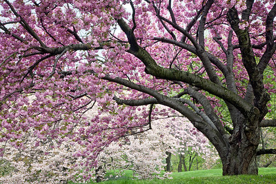Magnificent Trees at the NewYork Botanical Garden