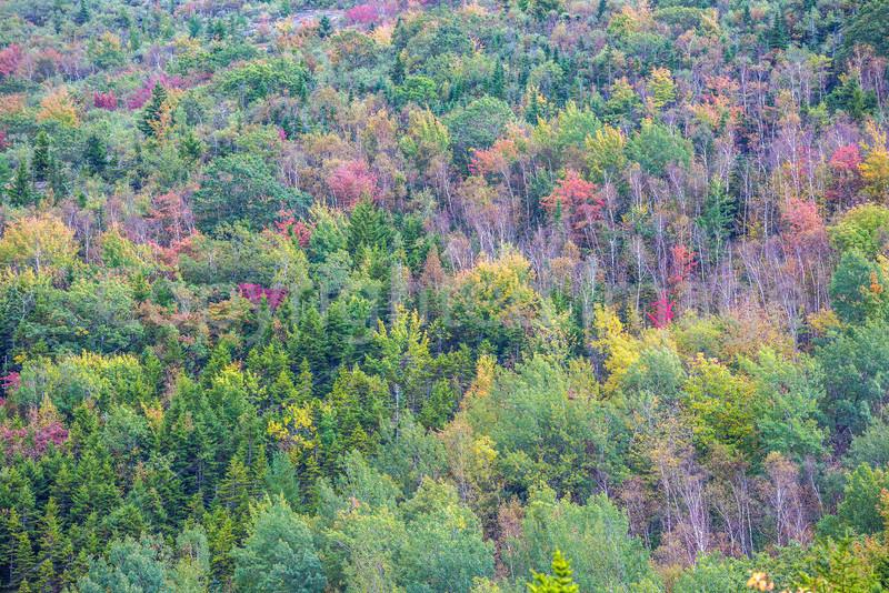 Maine - Acadia - Sojourn - D1-C3-0011 - 72 ppi