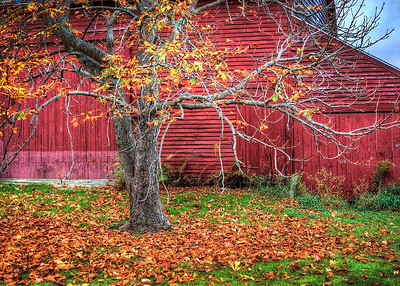 Red Barn and Chestnut tree, Brooklin Me.