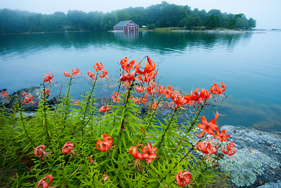 Red Boathouse and Tiger lillies. Blue Hill Me.