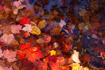 Falls brilliant colors, Bubble Pond Acadia Naional Park, Me.