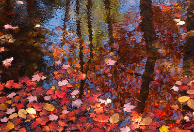Bubble pond with autumn leaves, Acadia National Park Me.