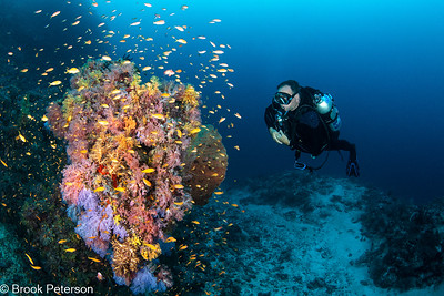 Diver Observing Anthias
