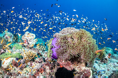 Anemone Reefscape
