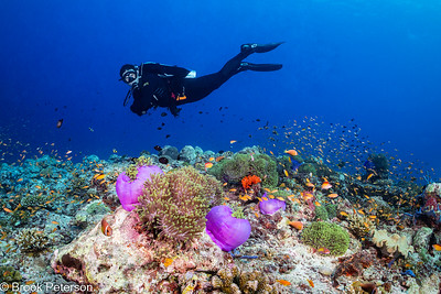 Diver over Coral Reef