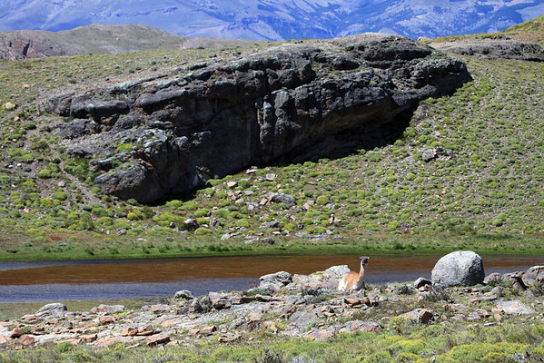 Guanaco resting among the rocky terrain of the Patagonia Steepe ecoregion - with a glacial formed lagoon below and the slopes of Sierra del Torro in the distal background.