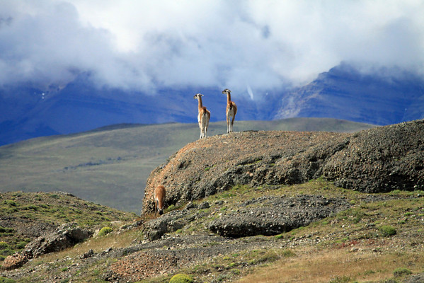 From the Guanacos amongst the conglomerate rock - to the distal Mt. Almirante Nieto amongst the clouds.