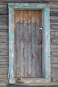 Coyote pup and old farmhouse door