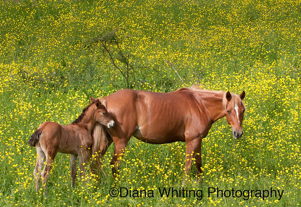 Colt with Mom May 2012