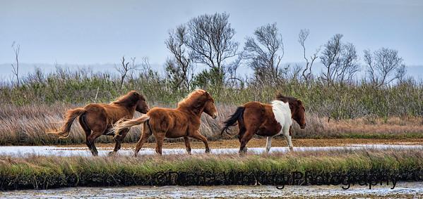 Wild Horses DSC_9132 copy 2