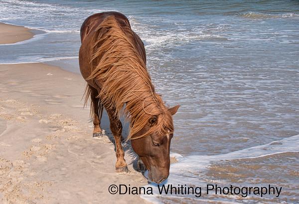 Wild Ponies_DSC0055 copy 2