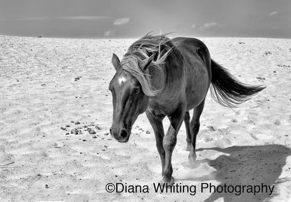 Wild Horses_DSC9997 copy 6