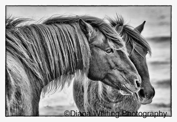_DSC0163   Wild Horses