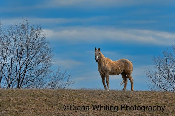 Horse DSC_8212 copy
