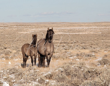 Wild Horse Mare and Colt 8694
