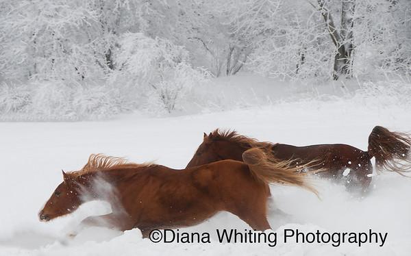Horses Winter Run