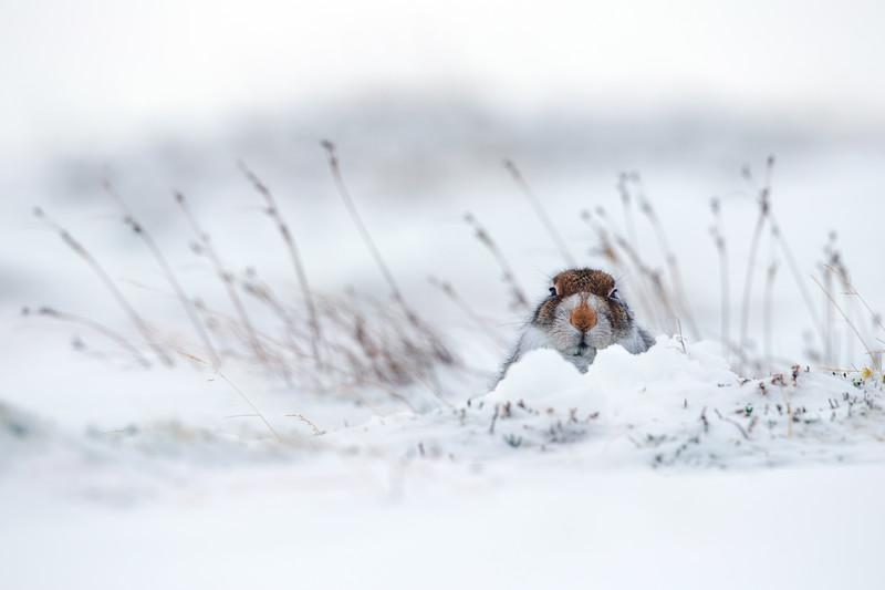 Snow Patol