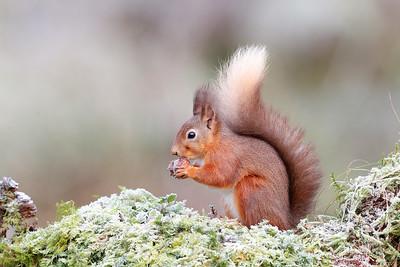 Frosty Nuts