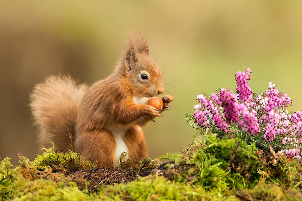Heather & Nuts