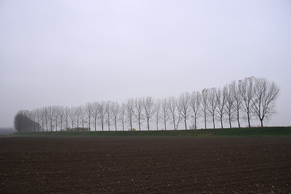 Trees on a Levee - Sant'Agata Bolognese, Bologna, Italy - November 26, 2012