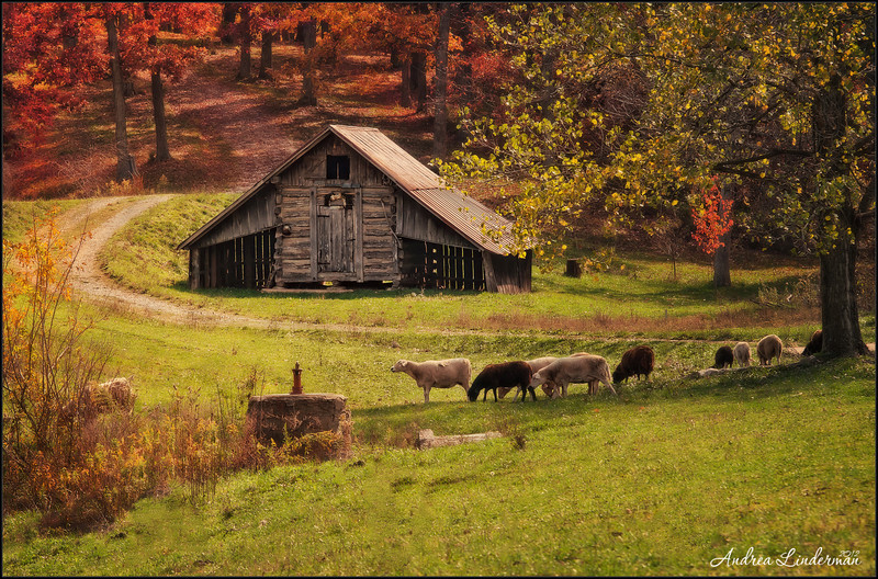 Sheep Barn