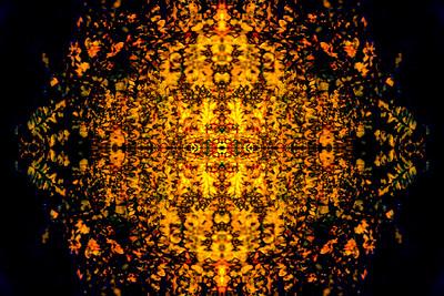 Orange Ferns Mandala