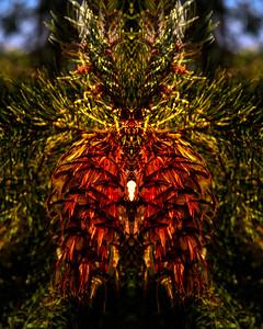 Pine Cone spirit