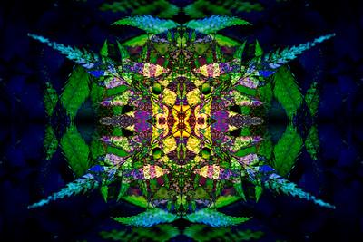 Sword Ferns Mandala 2