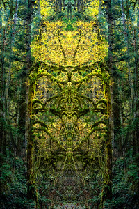 Portal in the forest.