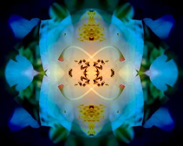 Spring Azalea Mandala