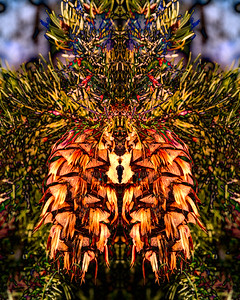 Pine Cone Mandala