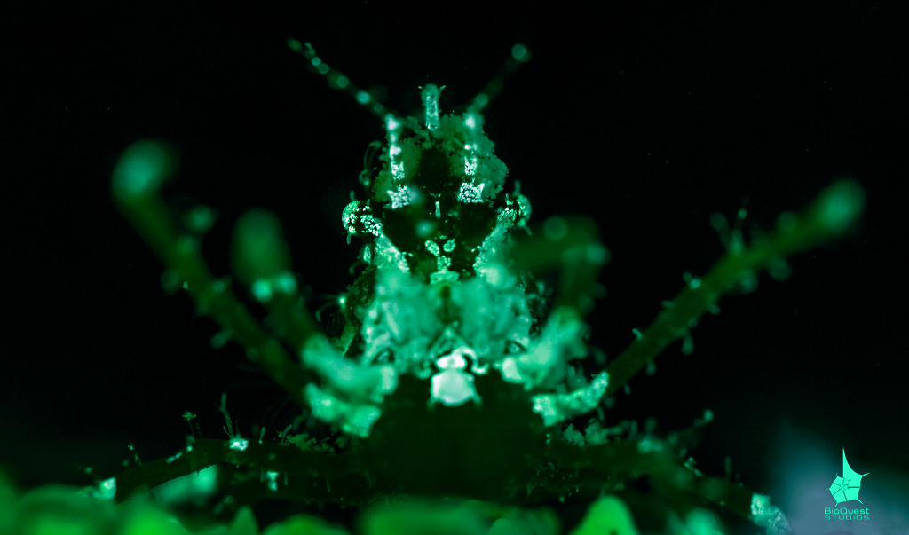 Tiny crab fluorescencing.