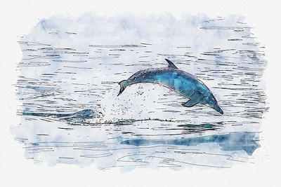 Dolphin Jumping in the Ocean