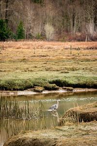 Heron Crossing
