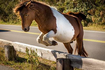 Pony Leap