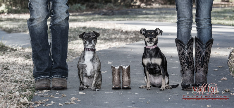 Dogs with baby boots