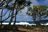 From the shaded and sunlit Hala Trees (Thatch Screwpine) and waves breaking on the eastern coastline of the Ke'anae Peninsula - to Pauwalu Point and Maku Mana (islet, or small rock island) - Northeast island region