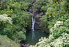 Upper Puohokamoa Falls - dropping about 20 ft. (6 m) over the Mafic Lava - also called Basaltic Lava, characterized by its high iron and magnesium content with a relatively lower aluminum and silica content, which erupt at temperatures > 1750 °F (954 °C), and has a low viscosity magma, thus forming a shield volcano (characterized by its large size with a long and gradual low profile slope)