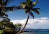 Beyond the Coconut Palm to Molokini Creater and northern slope of Kaho'olawe Island (uninhabited) - South Island region