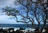 Saline mist content altering the leaf growth along the Ke'anae Peninsula - Northeast island region