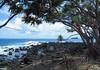 Hala Trees (Pandanus tectorius ) at Ke'anae Point - with Maku Mana (islet, or small rock island) along the distal horizon - Northeast island region