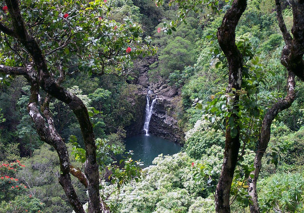 """Upper Puohokamoa Falls - flowing over the igneous rock, from beyond the blooming Ohi'a Tree - Northeast island region (basically the northeastern slope or flank of the Haleakala Volcano, which is the larger of two volcanoes (comprising 77% of the island), the other Kahalawai Volcano, which together forms the island of Maui - where one can (via vehicle) experience within 1 hour, the extremes of our planet's """"climate zones"""", from: alpine to steepe, chaparaal, grasslands and rainforest (from a mountain's snow peak to the Pacific waters ranging year-round from 74-80°F (23-27°C) - basically the weather can change in a mile or a minute, here on """"The Valley Isle"""" which refers to the isthmus that connects its two mountains (or volcanoes)."""