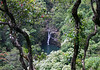 "Upper Puohokamoa Falls - flowing over the igneous rock, from beyond the blooming Ohi'a Tree - Northeast island region (basically the northeastern slope or flank of the Haleakala Volcano, which is the larger of two volcanoes (comprising 77% of the island), the other Kahalawai Volcano, which together forms the island of Maui - where one can (via vehicle) experience within 1 hour, the extremes of our planet's ""climate zones"", from: alpine to steepe, chaparaal, grasslands and rainforest (from a mountain's snow peak to the Pacific waters ranging year-round from 74-80°F (23-27°C) - basically the weather can change in a mile or a minute, here on ""The Valley Isle"" which refers to the isthmus that connects its two mountains (or volcanoes)."