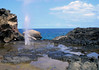 Nakalele Blowhole - eroded from the volcanic rock - West Maui region