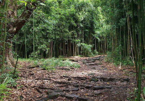 Along the Pipiwai Stream Trail - through the dense stand of bamboo - Haleakala National Park - Southeast island region