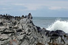 Dragon's Teeth - at Makaluapuna Point - where the water eroded volcanic rock has been coated with a light gray color, from the saline spray and mist from the Pacific - West Maui region