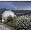 Cactus Dome