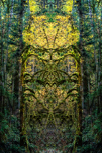 A Forest Portal