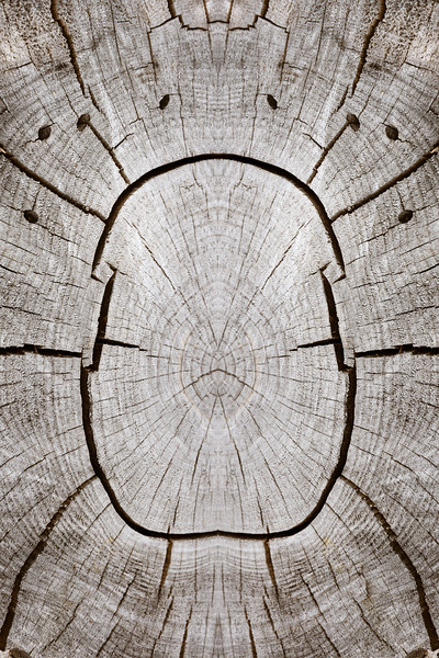 Scarab Mandala